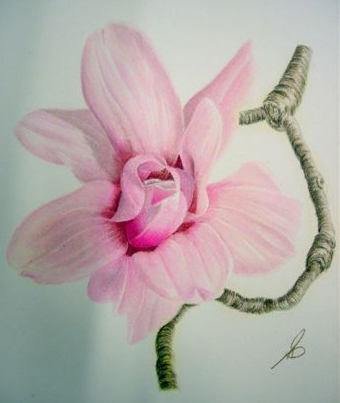 painting flowers with colored pencils a bagsc workshop with gary