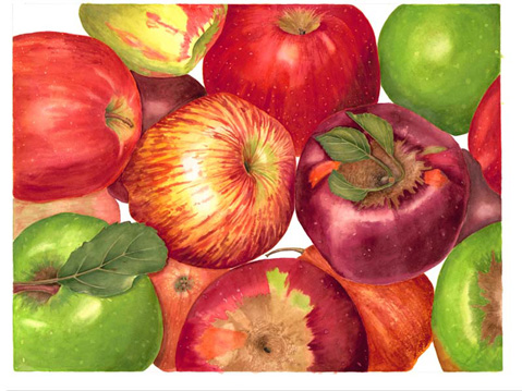 Sally Jacobs, Apples