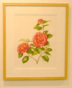 Camellia Japonica by Akiko Enokido, © 2009