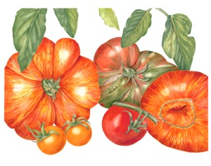"""Tomatoes"", © 2010, Sally Jacobs, all rights reserved."
