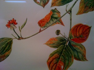 "Sue Kuuskmae's painting, ""Dogwood in Fall"""
