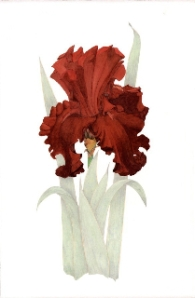 "Iris ""Fleur de lis"", watercolor by Arillyn Moran-Lawrence"