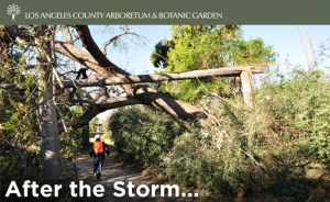 The LA Arboretum After The Storm