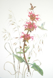 Hummingbird Sage, Honorable Mention, by Estelle DeRidder, colored pencil © 2012