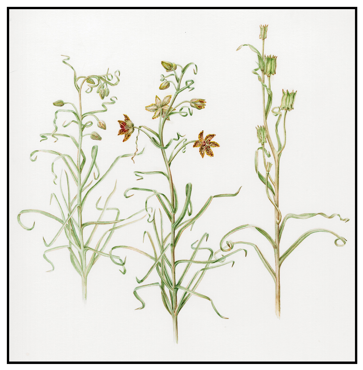 Displaying 19> Images For - Wildflower Drawing...