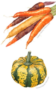 Vegetables painted by Sally Jacobs, watercolor, © 2012, all rights reserved.