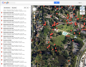 """Satellite"" view of the Google map of the locations of Arboretum introductions."