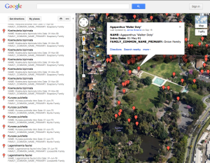 """Satellite"" view of the Google map of the locations of Arboretum introductions with plant information."