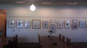 "The ""Succulent Leaves"" Category is up on the wall, waiting for signage and labels."