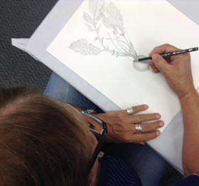 Treasures' student drawing a radish in graphite. Photo courtesy of Bowers Museum/Council on Aging Orange County © 2014.