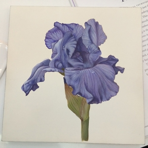 Iris painting in egg tempera by Laurence Peirson. Photo by Beth Stone.
