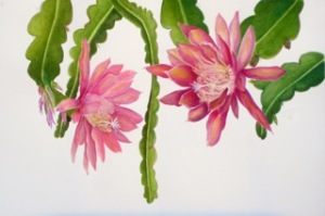 Epiphyllum, watercolor and pastel on paper by Suzanne Kuuskmae, © 2014, all rights reserved.