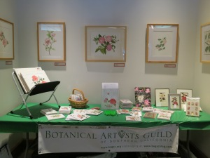 The BAGSC information and sales table, with some of the Camellia botanical artwork.