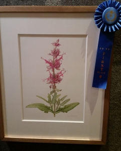 First place winner, Joan Keesey, Salvia spathacea, watercolor. © 2014, all rights reserved.