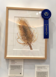 People's Choice first place award went to Estelle DeRidder's, Fuller's Teasel, Dipsacus fullonum, colored pencil on paper, © 2015 Estelle DeRidder, all rights reserved.