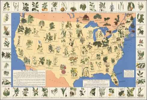 Medicinal plant map of the United States of America, David Rumsey Map Collection, 1932. Author: National Wholesale Druggists' Association, Edwin Newcomb. Publisher: Einson-Freeman Co., Inc., New York.