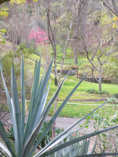University of California, Riverside, Botanic Garden. Photo by Tania Marien, © 2015, all rights reserved.