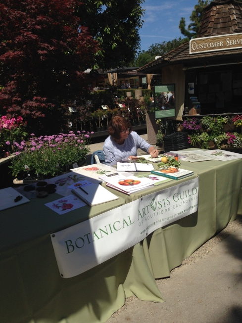 """Diane Daly demonstrating at last year's """"Day of Art"""" at Roger's Gardens. Photo by Deborah Shaw, © 2015, all rights reserved."""