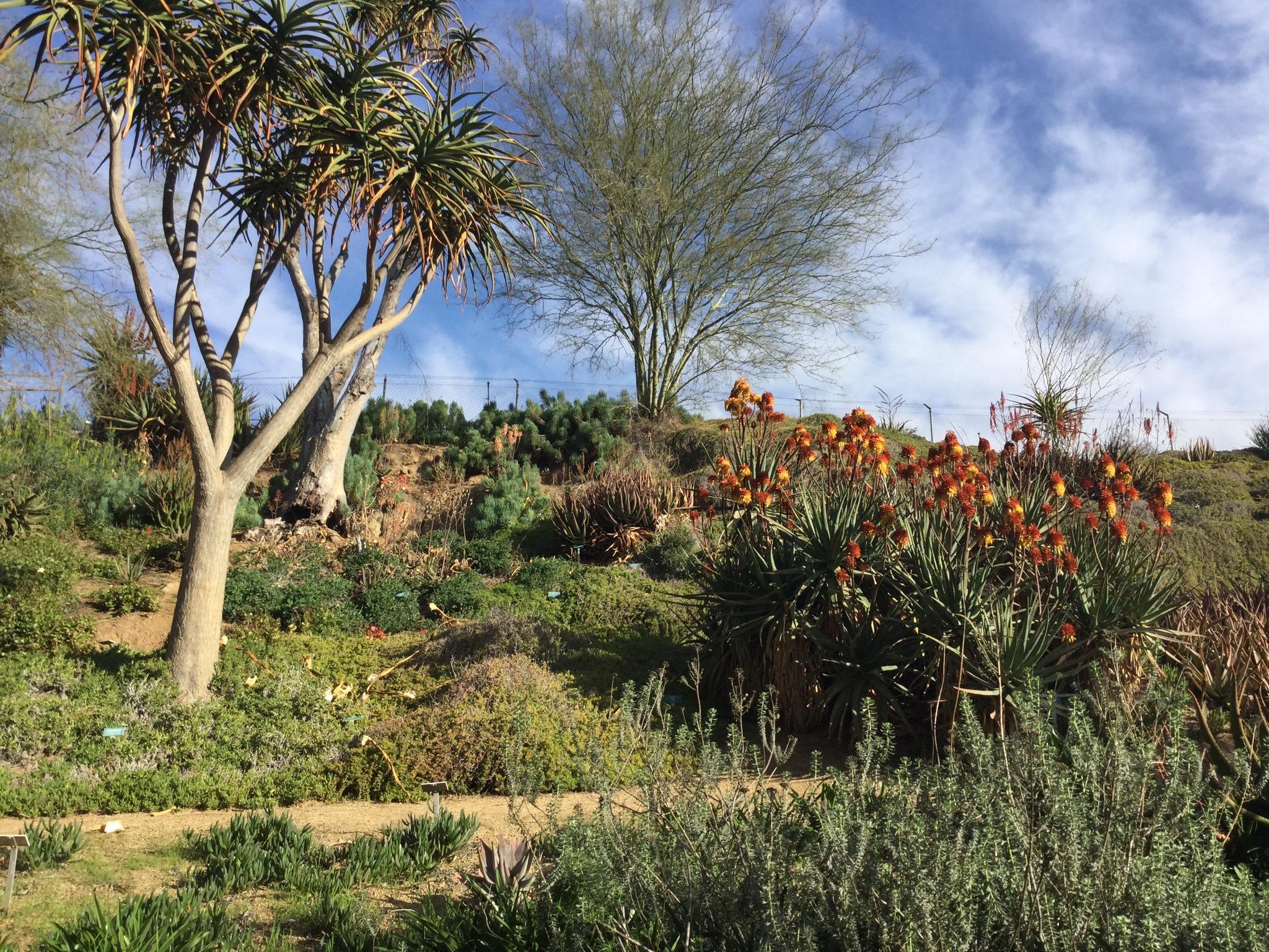 Explore The South African Garden. UC Riverside Botanic Garden. Photo: Aloe,  Tania