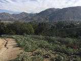 Marvel at Riverside's natural landscape. UC Riverside Botanic Garden. Photo: Box Springs Mountain, Tania Marien, © 2016.
