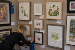 Theresa Marino, Gallery Director, Roger's Gardens, hanging blue ribbons after the judging. Photo: Linda Carpenter, © 2016, all rights reserved.