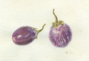 Solanium melongena, Ophelia and Calliope Miniature Eggplants, watercolor on vellum by Deborah Shaw. © 2016, all rights reserved; protected by Digimarc.