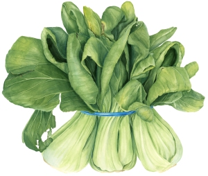 Bok choy, watercolor, by Sally Jacobs, © 2016.