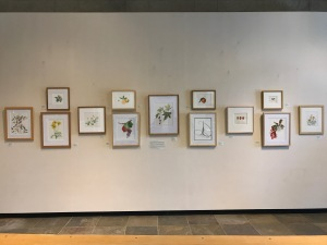 """Inspired by California"" by the Botanical Artists Guild of Southern California, in the Brody Botanical Center at The Huntington."