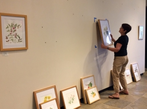 Janice Sharp hanging one of the selected artworks.