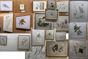A collage of artwork in the exhibition in The Arboretum Library. Photo collage by Janice Sharp, © 2017.