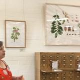 Deborah Shaw discusses her Castanospermum australe, watercolor on paper.