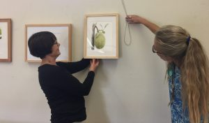 Janice Sharp (left) and Lesley Randall (right) hang Olga Ryabtsova's painting of a Jackfruit. Photo by Olga Ryabtsova, © 2017.