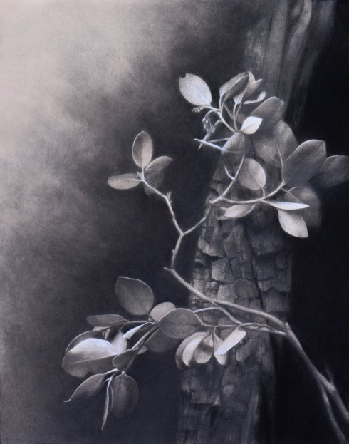 First Place and Conference Choice, Burned Manzanita, © Marie Brennan.