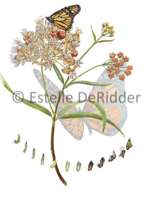 Honorable Mention, 