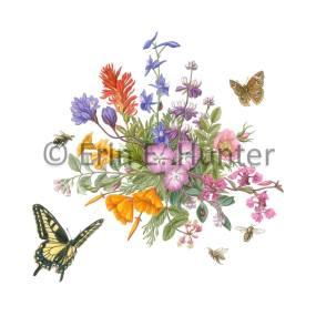 Honorable Mention, Upper Bidwell Wildflowers, © Erin E. Hunter, www.eehunter.com