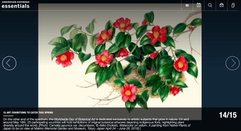 BAGSC and ASBA member Akiko Enokido's, Camellia japonica var. decumbens.