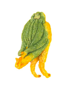 "Sally Jacobs' ""Buddha's Hand (Lemon Fingers) Watercolor,"" 19x16. Part of Sally Jacobs' ""Sundays at the Farmers Market"" exhibition at the TAG Gallery in Los Angeles."