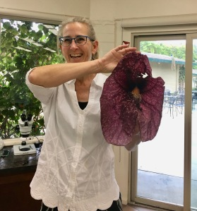 Lesley Randall with one Aristolochia gigantea flower. Photo by Jude Wiesenfeld, © 2018.