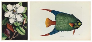 Images by Mark Catesby, one of the artists featured in the Josephine Michell Arader Natural History Print Collection.